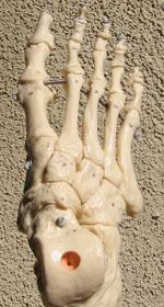 ap foot (1)
